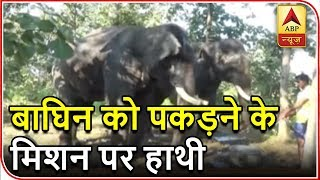 Namaste Bharat: Two elephants being used to track tigress in Maharashtra - ABPNEWSTV