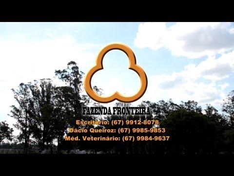 Estância Fronteira oferece 94 Touros Nelore PO