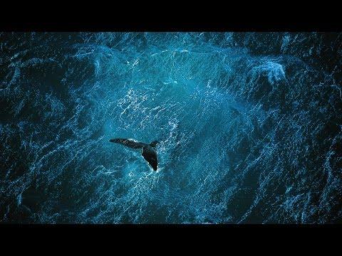Planet Ocean [CZ] - Film