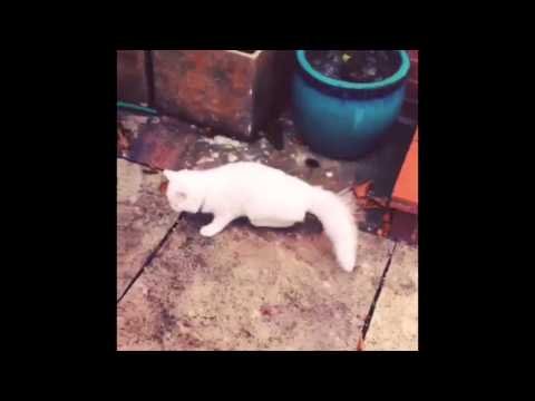 Funny Kitten Compilation