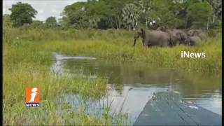 Crocodile Attack On Elephant In Afrika | iNews - INEWS