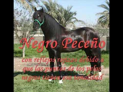 el caballo pura raza español