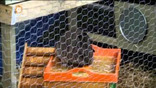 268 Hasen und Kaninchen - Gefährliche Grabung