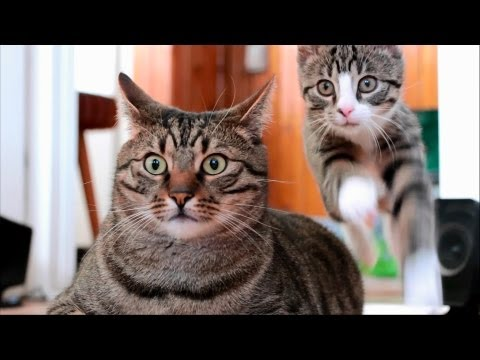 Awesome Cats - BoBo & Nikita