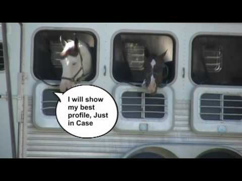 If Horses Could Talk 10 2 2012