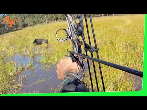 Pig Hunt 2012 June Gulf Country Australia Wild Boars - Andy Thomsen Rod Collings