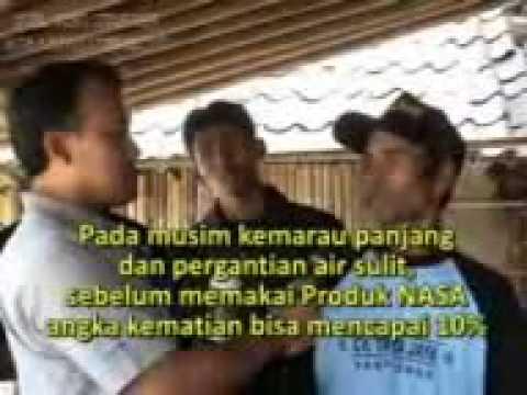Kesaksian Budidaya Lele  ( call 085721418338 )