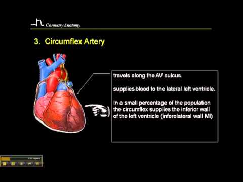 12-15 Lead ECG: Coronary Anatomy Part 3