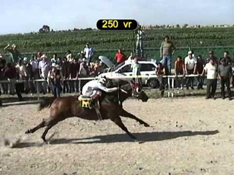 carreras de caballos en oaxaca