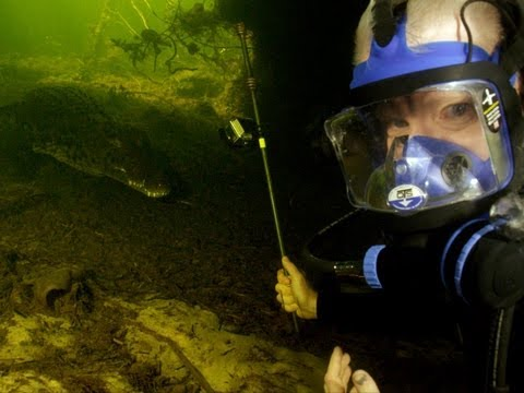Nile Crocodiles: Diving with a deadly predator