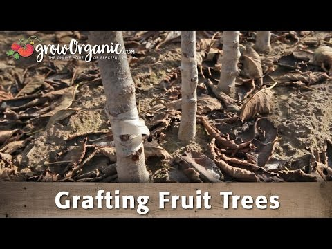 Grafting Fruit Trees with Dave Wilson