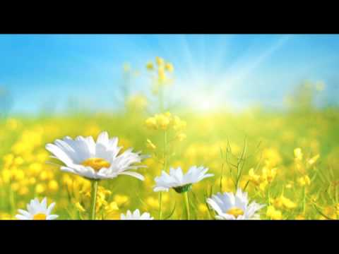 Reiki: Meditation Music for Reiki Classes, Yoga and Ti Chi Chuan, Relax and Meditation