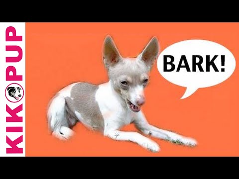 Dog Training- How to train your dog not to bark- Episode 1