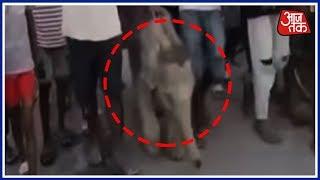 नाली में गिरे हाथी के बच्चे को बचाया - AAJTAKTV