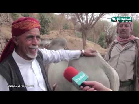 تقرير : مهاجل الزراعة تقليد قديم في إب (22-3-2019)
