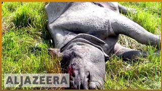 🦏 🇮🇳 Kaziranga park fights to save India's endangered one-horned rhino | Al Jazeera English - ALJAZEERAENGLISH