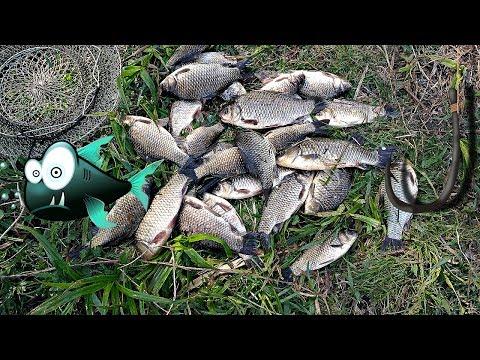 секреты бывалых рыбаков на карася