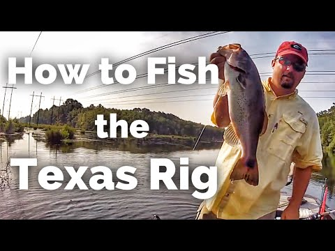 Texas Rig (Tips and Tricks)