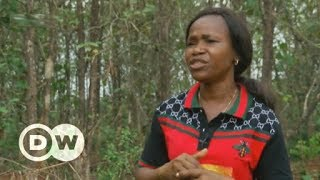 Reforesting Nigeria before it's too late | DW English - DEUTSCHEWELLEENGLISH