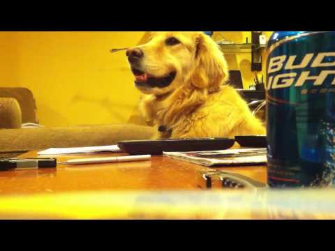 Meet Golden, The Dog Who Loves The Guitar