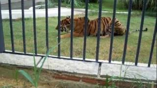 Gebze- Darıca Hayvanat Bahçesi - kaptan belgeseli