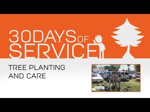 30 Days of Service by Brad Jamison: Day 15 - Tree Planting and Care