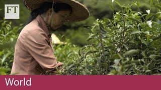 The world's most expensive tea - FINANCIALTIMESVIDEOS