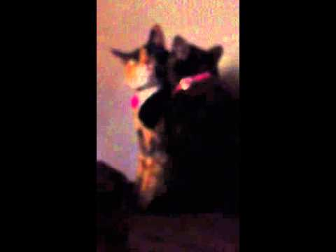 Happy Kittens Video