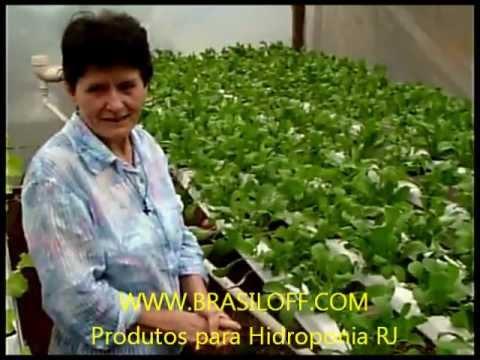 Materia sobre hidroponia horta hidroponica