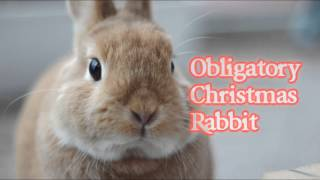 Royalty Free :Obligatory Christmas Rabbit