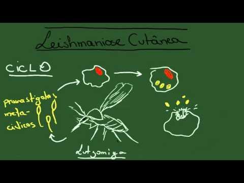 Leishmaniose Tegumentar Americana - Resumo - Parasitologia