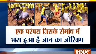 India TV special report on Jallikattu - INDIATV