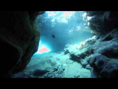 Diving Kailua-Kona