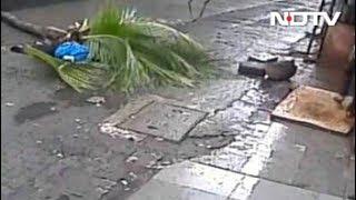 मुंबई में महिला के ऊपर गिरा नारियल का पेड़,मौत - NDTV