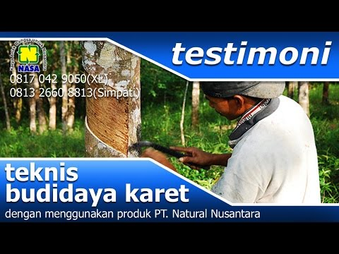 Kesaksian KARET pupuk organik Natural Nusantara NASA   YouTube