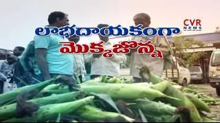 Ankapur Village Success Story   Ankapur Corn Crop Farmers   CVR News - CVRNEWSOFFICIAL