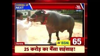100 Shehar 100 Khabar: Shahenshah, A Buffalo Priced At ₹25 Crore - AAJTAKTV