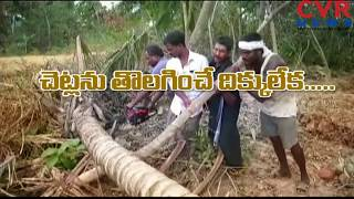 TITLI Cyclone Effect  : Uddanam Coconut Farmers Lost Everything | CVR News - CVRNEWSOFFICIAL
