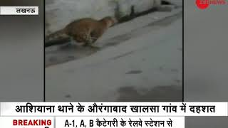 Lucknow: Leopard still runs loose in Rihayashi area - ZEENEWS
