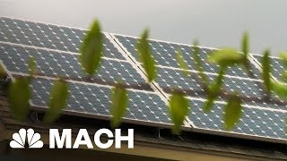 Why Florida Residents Couldn't Use Solar Power After Irma Knocked Out The Power | Mach | NBC News - NBCNEWS