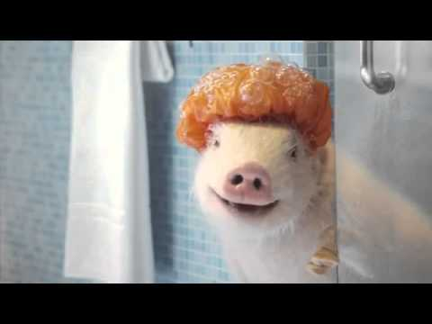 GEICO Commercial - Featuring Maxwell the Piggy - AdsYo!