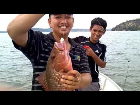 (mangrove jack fishing) memancing ikan merah / siakap merah ( MJ )