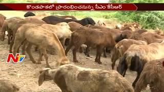 CM KCR to Distribute Sheeps to Yadav and Kuruma Caste's today    NTV - NTVTELUGUHD