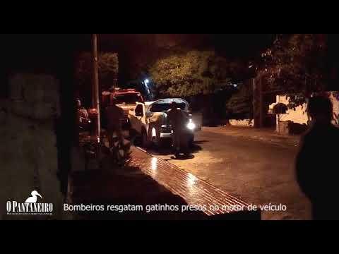 Bombeiros resgatam gatinhos presos no motor de veículo