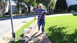 5 Dog Walker Tips - VOAVIDEO