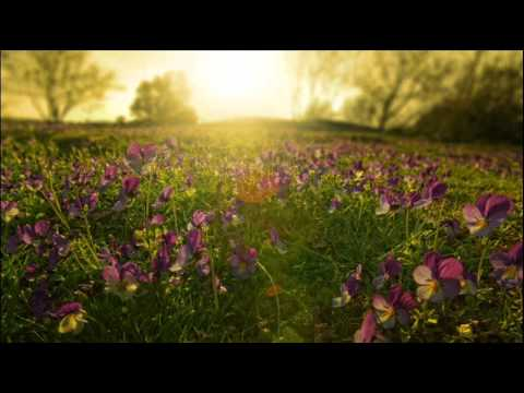 Kamil Esten - Fields of Love (Original Mix)