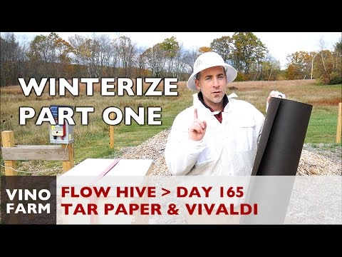 Flow Hive - Winterization (1) - Day 165 - Beginner Beekeeper