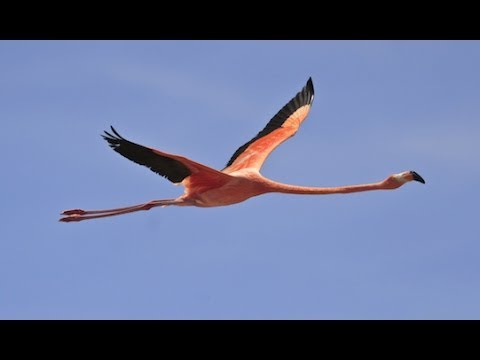 Bird Watching in Spain (Almeria and Andalusia)