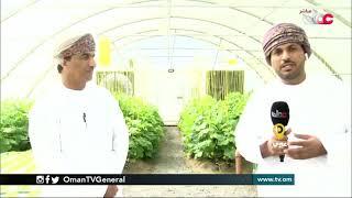ربط مباشر من قرية عملا بولاية عبري بمحافظة الظاهرة  للحديث حول مشروع أحيومائي (استزراع سمكي نباتي)