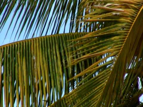 Close-up of green and yellow palm fronds in the wind in Hawaii.